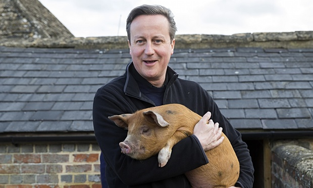 Cameron's piggy is in the middle of a question we're not asking