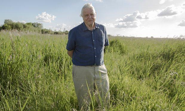 Pity David Attenborough – the BBC's Galápagos tortoise